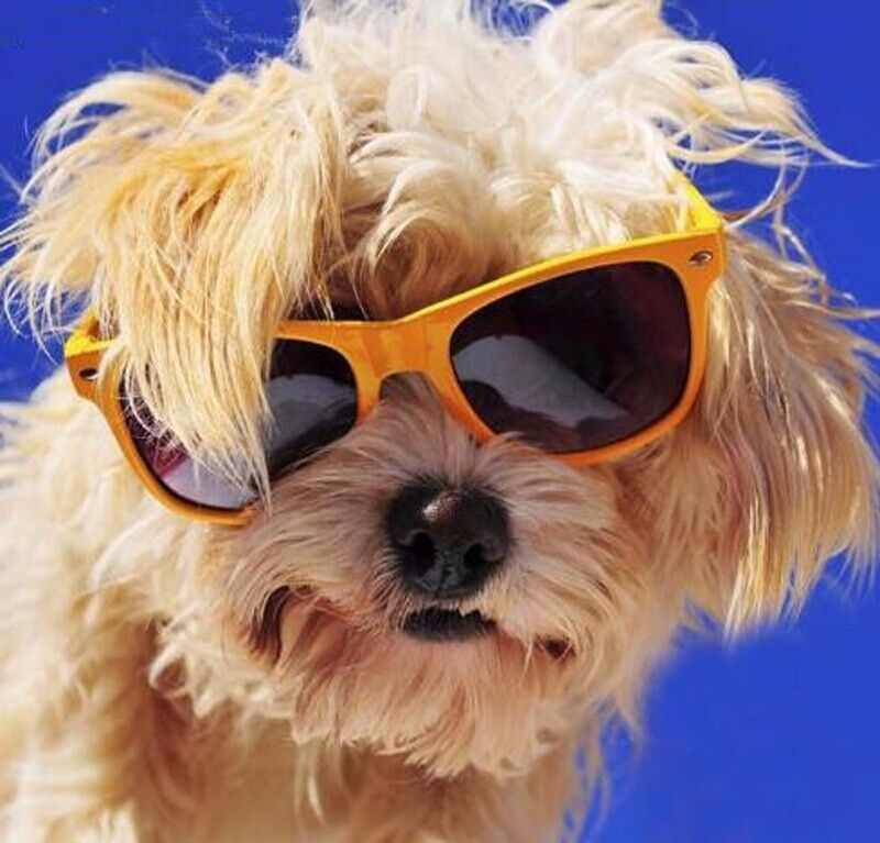 Puppy Sunglasses  por rolling sunglasses rolling sunglasses lots from
