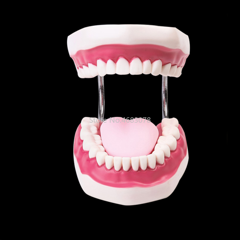 6 Times Dental Adult Teeth Model Oral Models Tooth With Tongue For Kindergarten Child Early Teaching Study Health Care Supplies