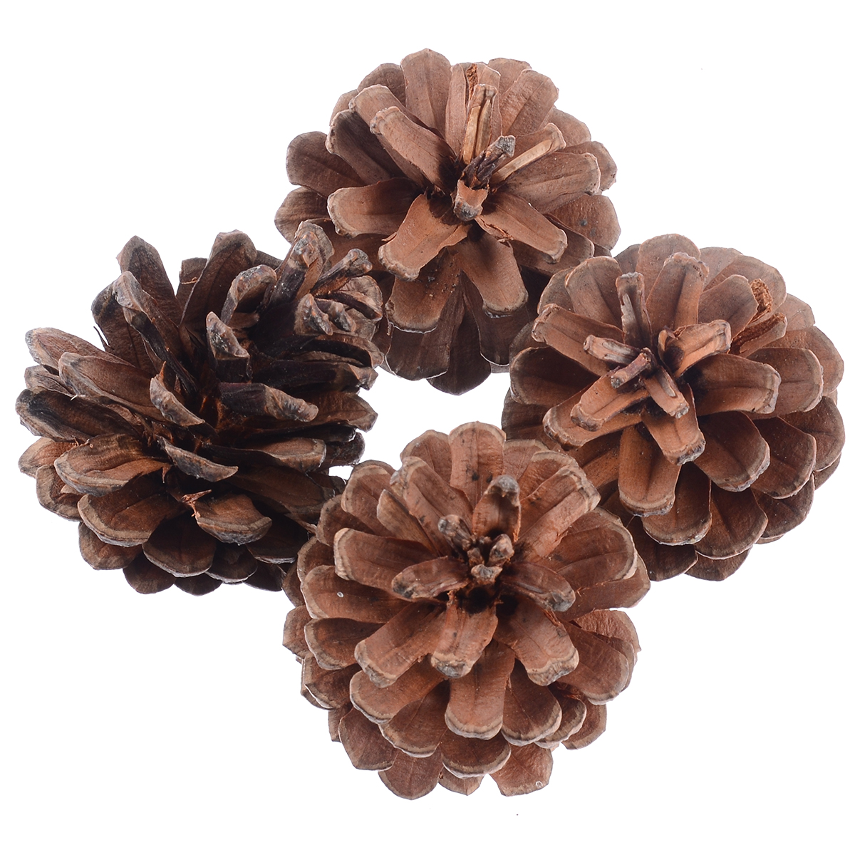 4pcs Pet Funny Chew Teeth Care Play Toy Wood Pine Cone For Rabbit Hamster Guinea Pig Pet Molars Supplies