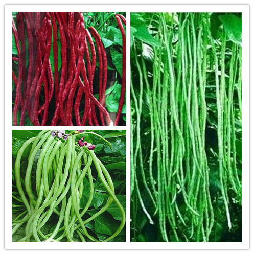 20 nutritious Lata Yard-long beans seeds Healthy Vegetable Seeds For Home Garden
