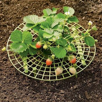 10 sztuk truskawka uchwyt ramki balkon sadzenia stojak owoców wsparcie roślin kwiat wspinaczka winorośli filar ogrodnictwo stojak # CW tanie i dobre opinie Z tworzywa sztucznego