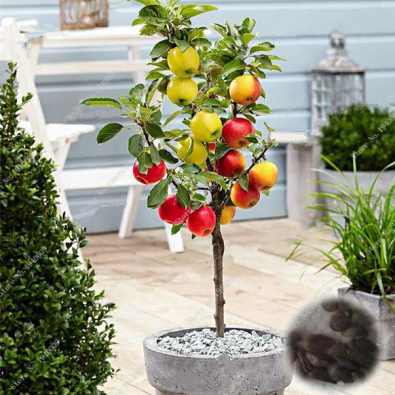 Compare prices on decorative apple tree online shopping for Apple tree decoration