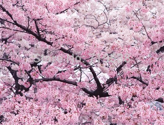 arbre rose-achetez des lots à petit prix arbre rose en provenance