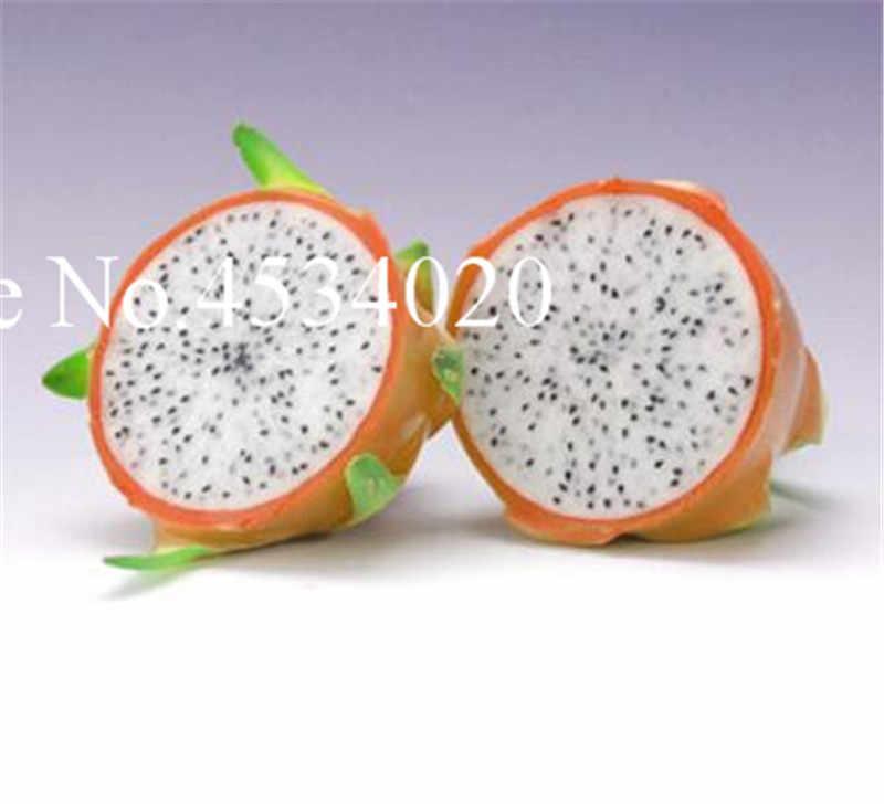 Terbaik Menjual! 100 Pcs Manis Pitaya Bonsai Pohon Tanaman Buah Naga Taman Pitaya Flores Non GMO Hylocereus Buah Pot Tanaman