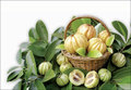 100% Pure Гарцинии камбоджийской Экстракт 75% HCA Потеря Веса Таблетки для похудения Сжигатель Жира 500 мг * 100 Капсул