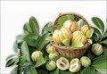 100% Pure Garcinia Cambogia Extract 75% HCA    500mg*100 Capsules