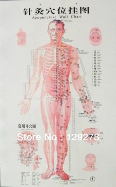 Free shipping acupuncture points charts wall form 4 pages pvc free shipping acupuncture points charts wall form 4 pages pvc 85cmx50cm meridian chart acupoint ccuart Image collections