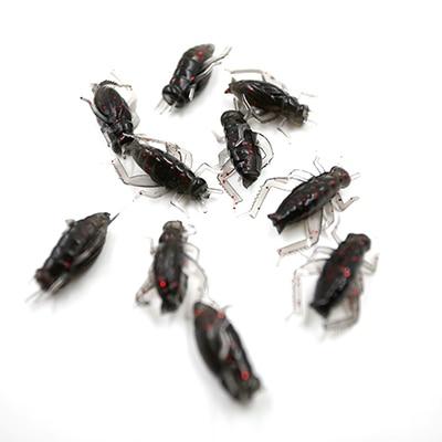 10 pcs/lot appâts d'insectes mous noir Cricket leurres de pêche appâts de poisson artificiels pêche antiparasitaire appâts de pêche accessoires