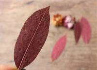 Ổi leaf DIY Khô Ép hoa cho điện thoại Di Động trang trí miễn phí giao hàng 120 cái