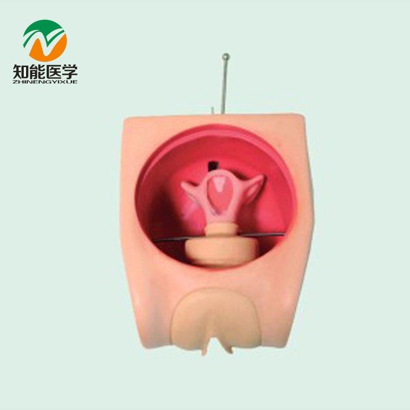 BIX-FT33B Senior Anatomy Uterus Female Contraception Model G174 bix ft33b senior anatomy uterus female contraception model g174