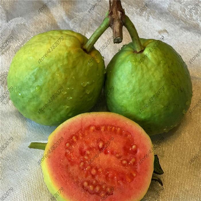 30 Pcs Large White Guava sweet fragrance fruit Edible Fruit Bonsai Tree in Bonsai from Home Garden