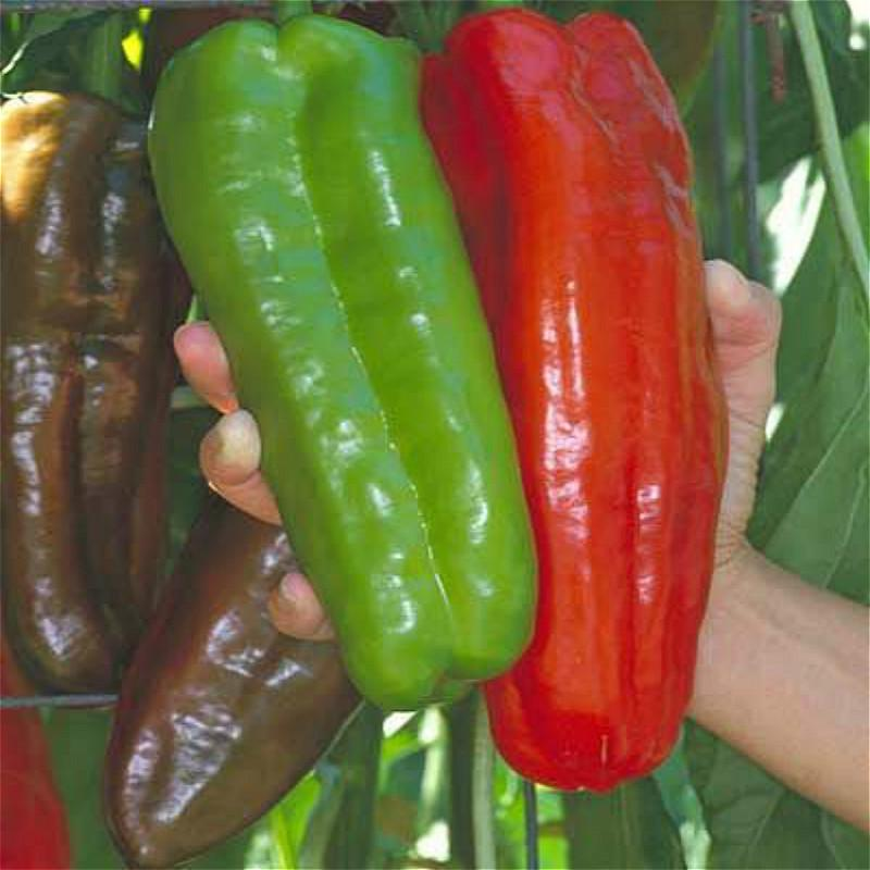 Garden plants Peter Pepper Seeds red hot chili peppers 50 seeds//pack