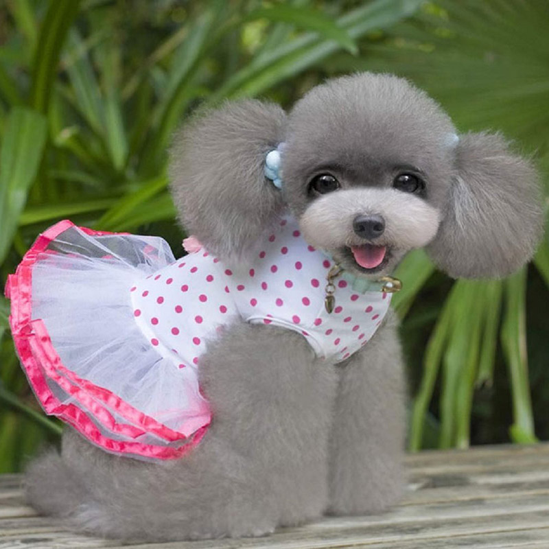 Фото собачка в платье