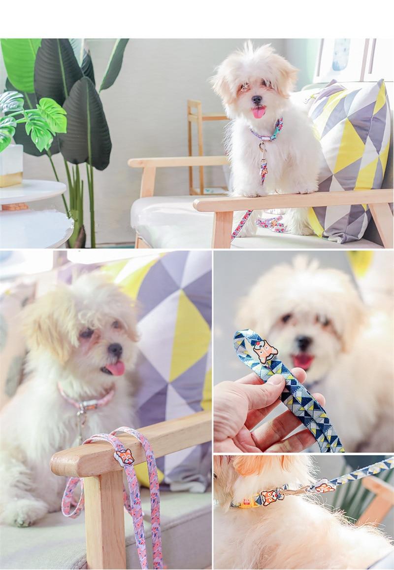 Dog Collars  (11)