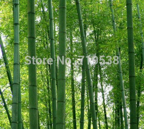 diy decorative ladder out of bamboo poles backyard x.htm best top 10 annual bamboos list and get free shipping 217j75e0  best top 10 annual bamboos list and get