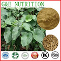 herbal supplement kava kava root  capsules      500mg x300pcs