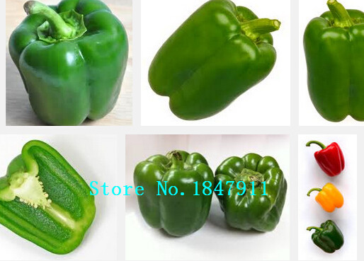 big sale pepper seed vegetable seed pods easy to growpepper fragrance high nutritional value 200 seedsbagin bonsai from home u0026 garden on