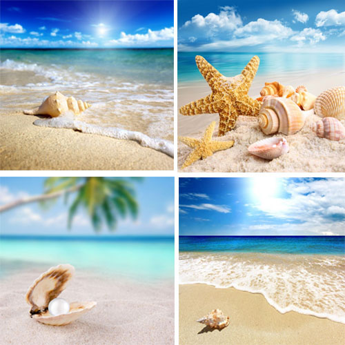 4 Peice Modern Seascape shells Canvas Print Artwork Landscape Sea Beach Pictures Canvas Paintings Wall Art for Home Decorations