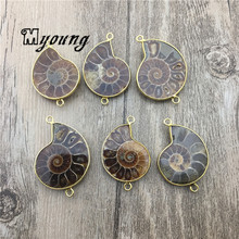 Genuine Ammonite Fossils Pendant Charms, Conch Fossils Connector, Double Bails Necklace Making Beads MY1766 27pcs natural teeth fossils aspecimens kit ornaments morocco shark teeth fossils