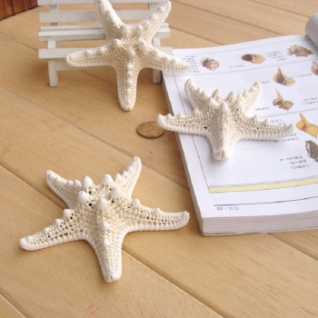6 pcs Natural Five Angle White Starfish 10cm -13cm Sea Star Shell Beach Wedding Nautical Display DIY Craft Home Party Decoration