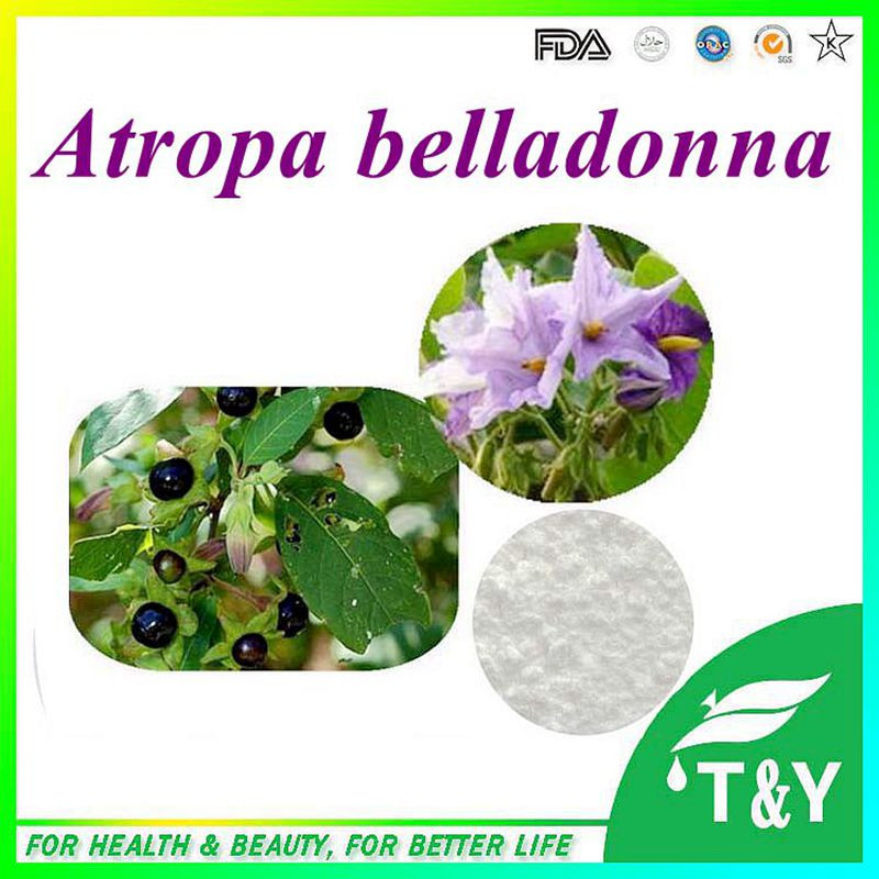 Best quality 99% Belladonna Atropa belladonna Extract with free shipping