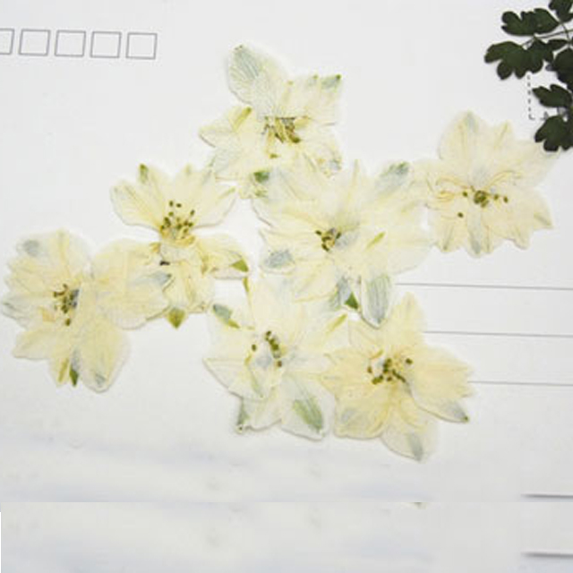 1000pcs white color larkspur dried pressed flower cheapest 1000pcs white color larkspur dried pressed flower cheapest manufacturers mightylinksfo