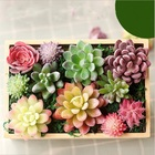 miniatures Home Simulation meat flocking plants Mini Succulents Plastic Artificial Plants Tree Garden Miniature Home Decor