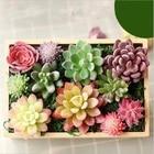 miniatures Home Simulation meat flocking plants Mini Succulents Plastic Artificial Plants Tree Garden Miniature Home Decor