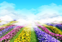 Laeacco Spring Blooming Flowers Blue Sky Scenic Nature Photography Background Customized Photographic Backdrops For Photo Studio