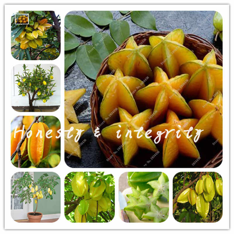 30pcs Edible Carambola Bonsai Star Fruit Rare Sementes Averrhoa Carambola Tree Garden Bonsai Pots Woody Plants Free Shipping