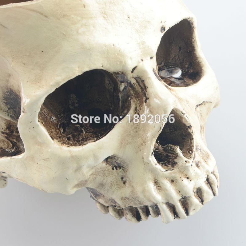 Brillante elegante casa animal grande modelo de cráneo ...