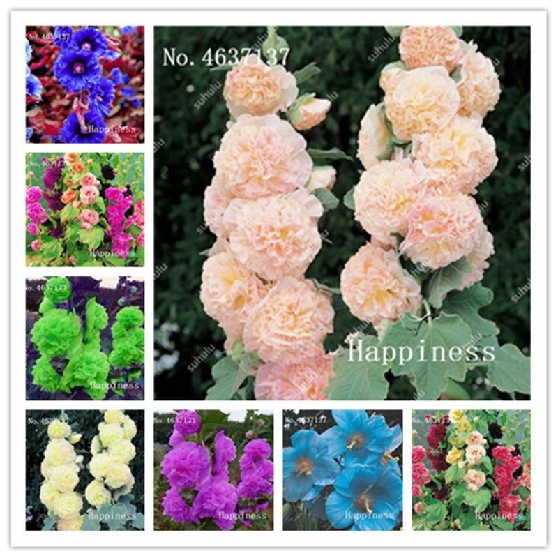 Sale! 200 Pcs/Pack Rare Japanese Double Hollyhock Flower Plant 100% True Flores Potted Bonsai Diy Home Garden Althaea Rosea