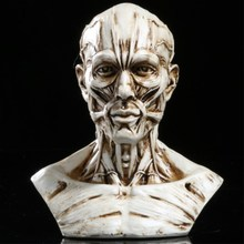 цена Art Sketch Human Muscle Skeleton Head Model Skull Anatomy Bust Model Home Decoration Accessories Halloween Gift онлайн в 2017 году