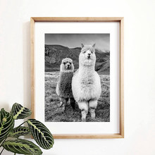 Alpaca Poster Canvas Art Painting Animal Prints Wall Art Nursery Decorative Picture Llama Black and White Wall Kids Room Decor