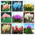 400pcs/bag pampas garss, pampas grass plant,Ornamental Plant Flowers Cortaderia Selloana Grass for home garden