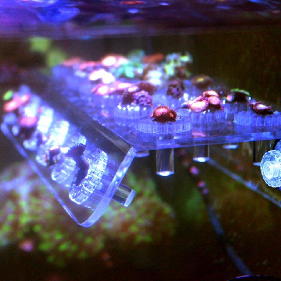 Pssopp Acr/ílico Acuario Coral Rack Soporte para Tanque de Peces Transparente Soporte Coral Frag Plugs Rack Tanque de Peces Vivo Ventosa Soporte con Seis Garras