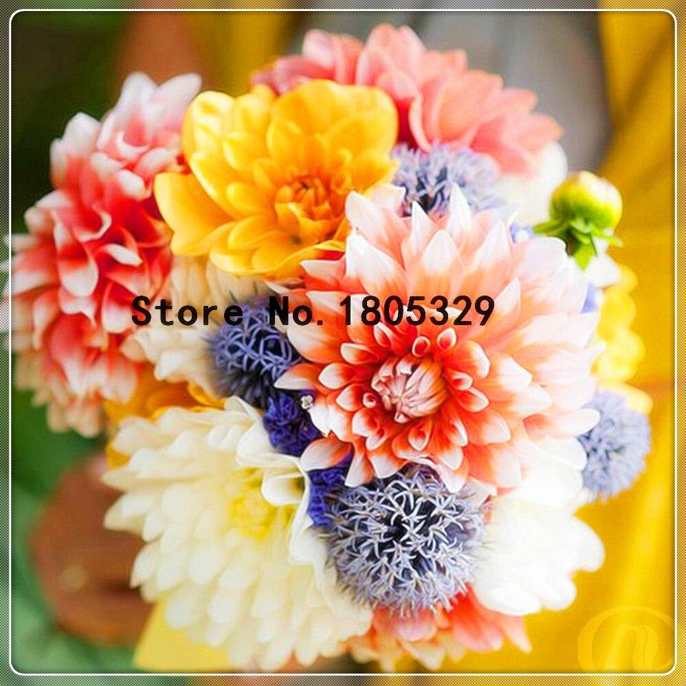 fleurs dahlia promotion-achetez des fleurs dahlia promotionnels