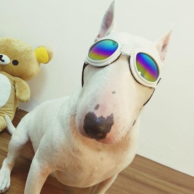 42244c72e9faa Pet óculos de sol frescos Da Moda Estilo Óculos de Design Desgaste do Olho  Proteção Para ...