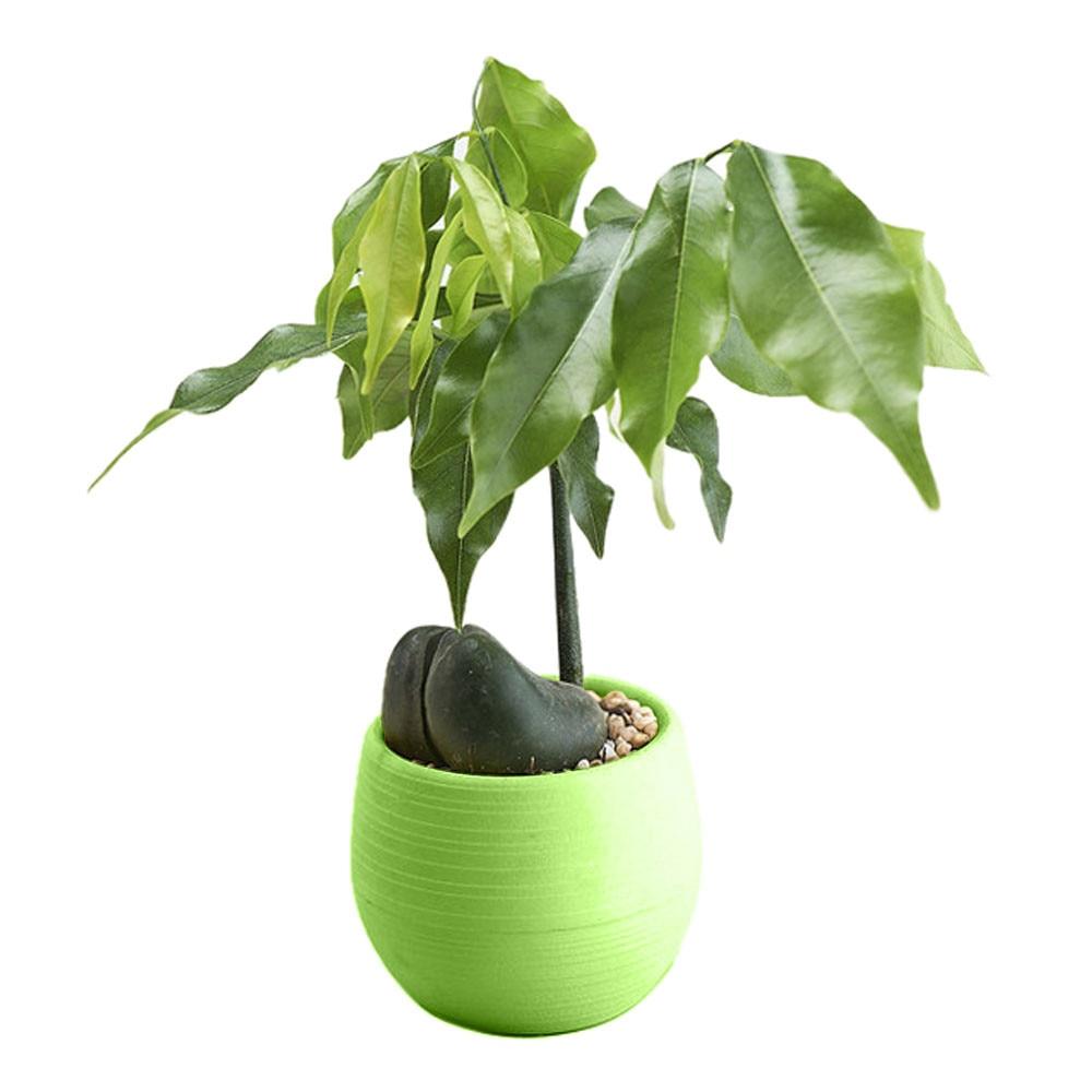 1Pc 6.5cm Round Plastic Flower Pot Plant Planter Garden Home Office Decor LFIT