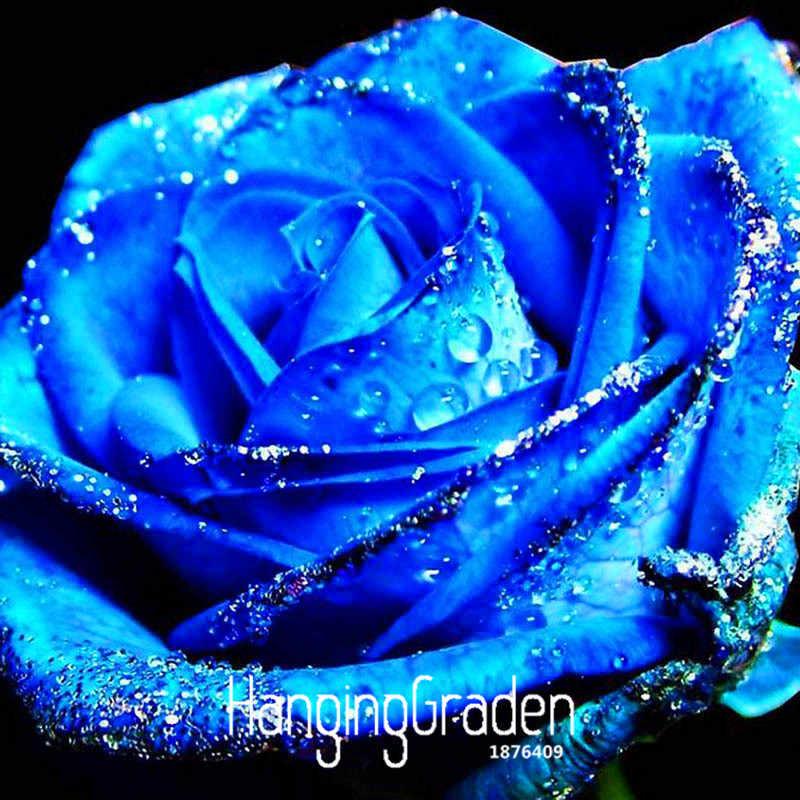 Скидка! Голубая роза ароматные сады цветущие растения сильные, синий дракон Роза, синий роза бонсай 150 шт./упак., # B3J4H1