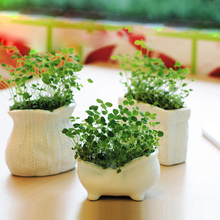 Get more info on the 1PC Creative Grass Growing Seed Head Planters Bonsai Pot Doll Miniature Plants Heads Desktop Decor micro-landscape ornaments