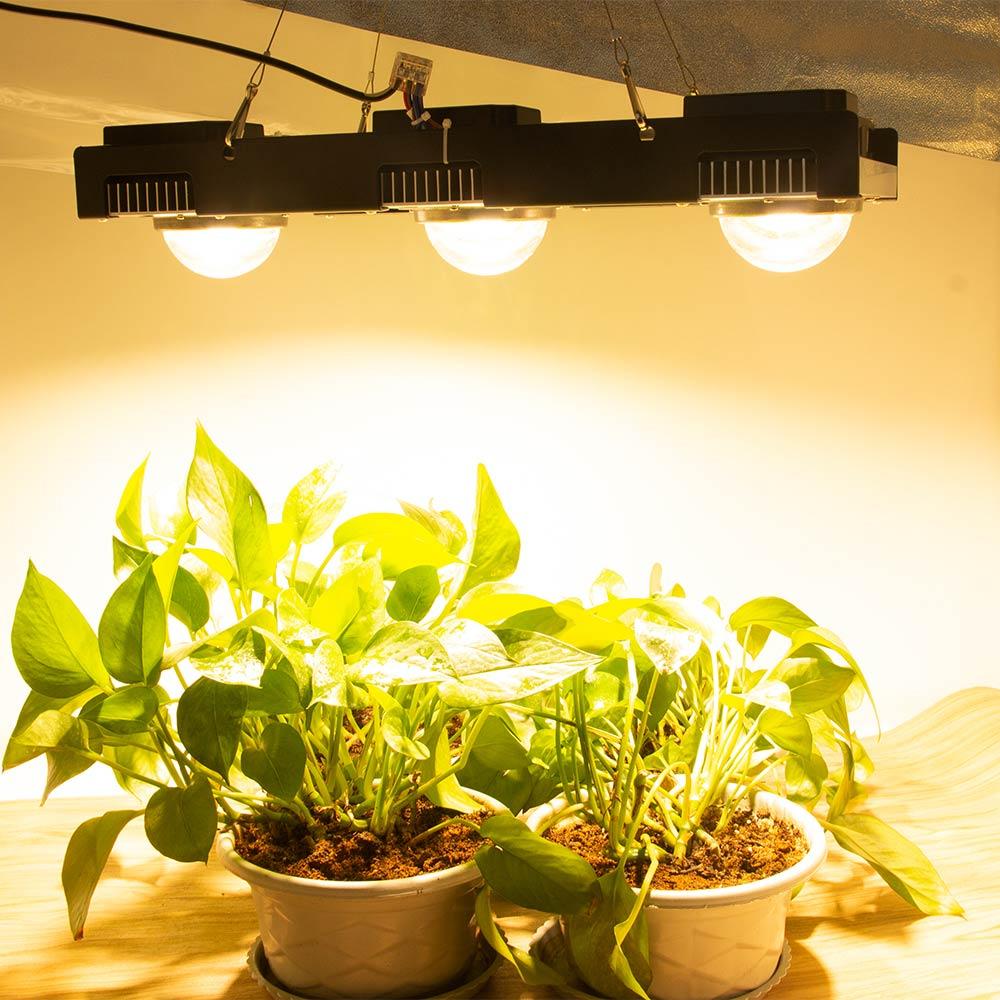 CREE CXB3590 COB LED grandir lumière spectre complet 200 W 300 W citoyen LED plante pousser lampe pour tente intérieure serres hydroponique plante