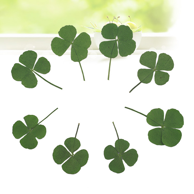 20pcs Pressed Dried Clover Leaf Dry Plants For Epoxy Resin Pendant Necklace Jewelry Making Craft DIY Accessories