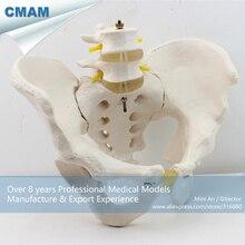 CMAM-PELVIS04 Anatomical Human Pelvis Model with Lumbar Vertebrae ,  Medical Science Educational Teaching Anatomical Models