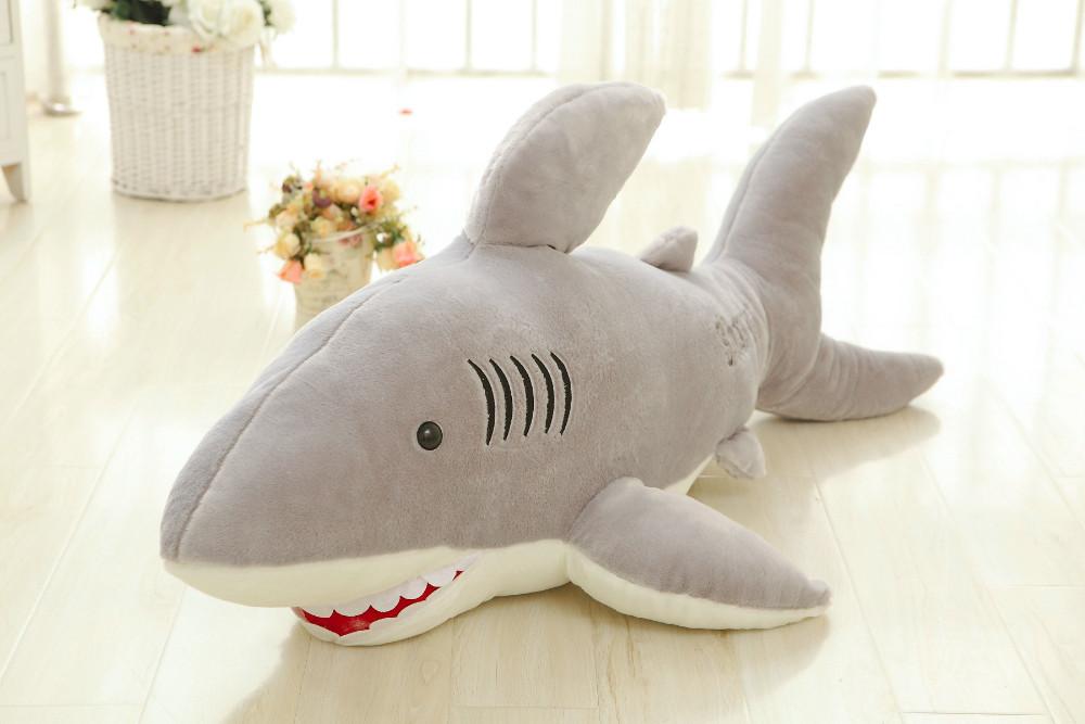 Shark (5)