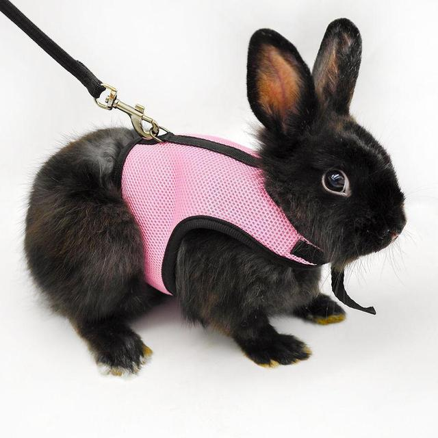 Hamster rabbit harness leash set ferret guinea pig small animal pet hamster rabbit harness leash set ferret guinea pig small animal pet supplies sm publicscrutiny Gallery