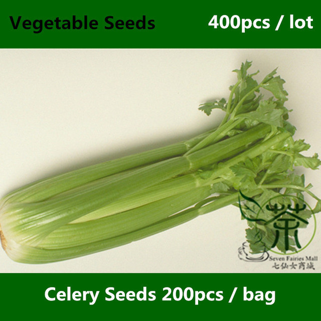 Outdoor Plants Seasons Celery Seeds For Planting 400pcs Nutrient