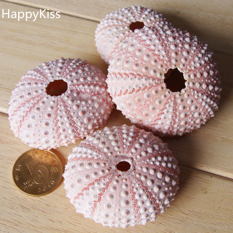 (10pcs/lot)Natural Small Pink Sea Urchin Natural Shell Conch Beach Wedding Decoration Coastal Home Decoration Sea Conch