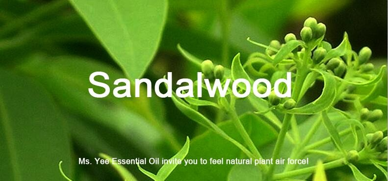 Pure Sandalwood Essential Oil is famous Aphrodisiac Anti Stress & Relax Mind Good Smell India Aromatherapy Oils Meditation 10Ml 1