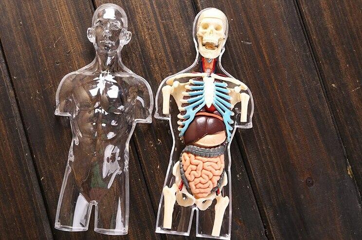 online shop dentist lab dental demonstration 4d puzzle transparent, Skeleton